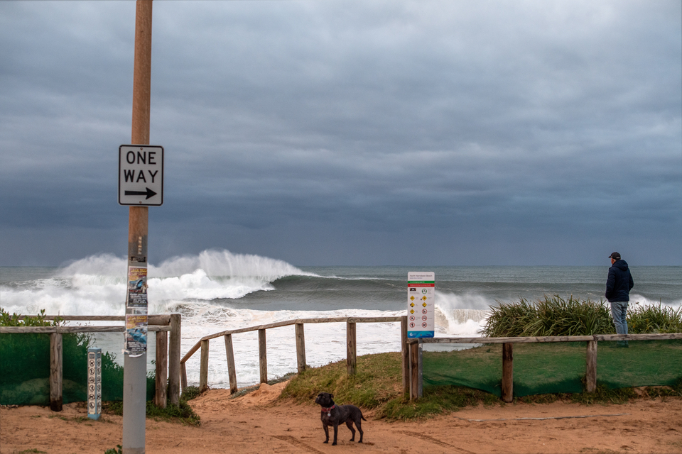 The whole event had an ominous tone. Not that the dog minded. Surf check on Wednesday.
